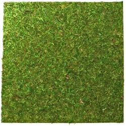 Repti-Zoo Natural Moss Back&Bottom - tło i podłoże z mchu 20x20cm