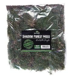 Terrario Shadow Forest Moss - mech naturalny 35x30cm