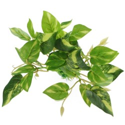 Bello Plant - Fig Tree - roślina L do obrazów 3D