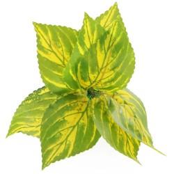 Bello Plant - Birch in Autumn- roślina M do obrazów 3D