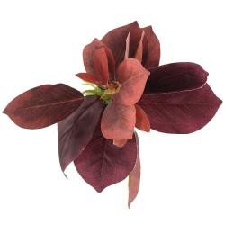 Bello Plant - Purple Poplar Tree - roślina M do obrazów 3D