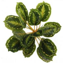 Bello Plant - Calathea Multi - roślina XXL do obrazów 3D