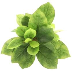 Bello Plant - Double Ficus - roślina M do obrazów 3D