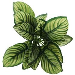 Bello Plant - Zebra White Galaxy - roślina XXL do obrazów 3D