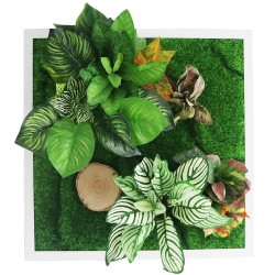 Garden Point - Bello Horizonte 50x50 - ogród ścienny 3D
