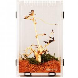 Terrario Mantis Area L - terrarium akrylowe dla modliszek i owadów
